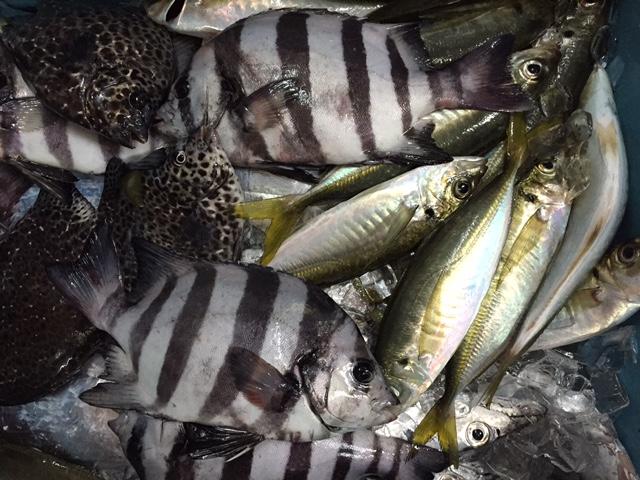 食欲の秋!魚も大漁!