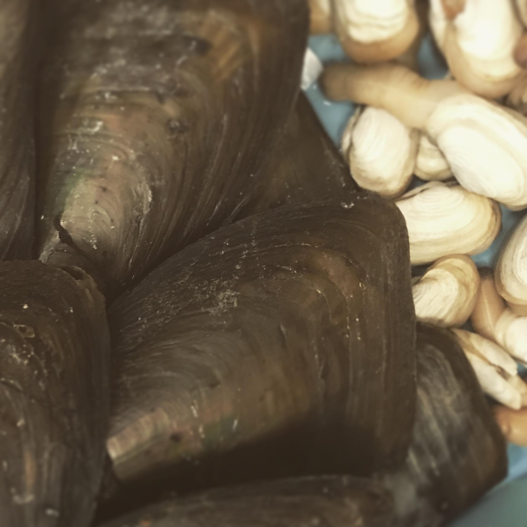 貝を仕入れることが出来ました。渥美貝づくし食べ比べセットがおすすめです。